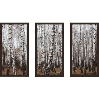 """Birching Around 7"" Framed Plexiglass Wall Art Set of 3"