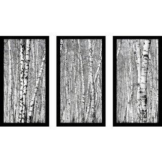 """Birching Around 5"" Framed Plexiglass Wall Art Set of 3"