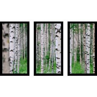 """""""Birch Wood, Finland"""" Framed Plexiglass Wall Art Set of 3"""