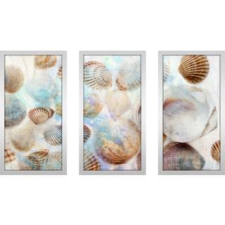 """Shells 1"" Framed Plexiglass Wall Art Set of 3"