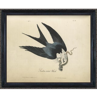 Vintage Collection 'Swallow-tailed Hawk' Framed High Quality Print on Canvas