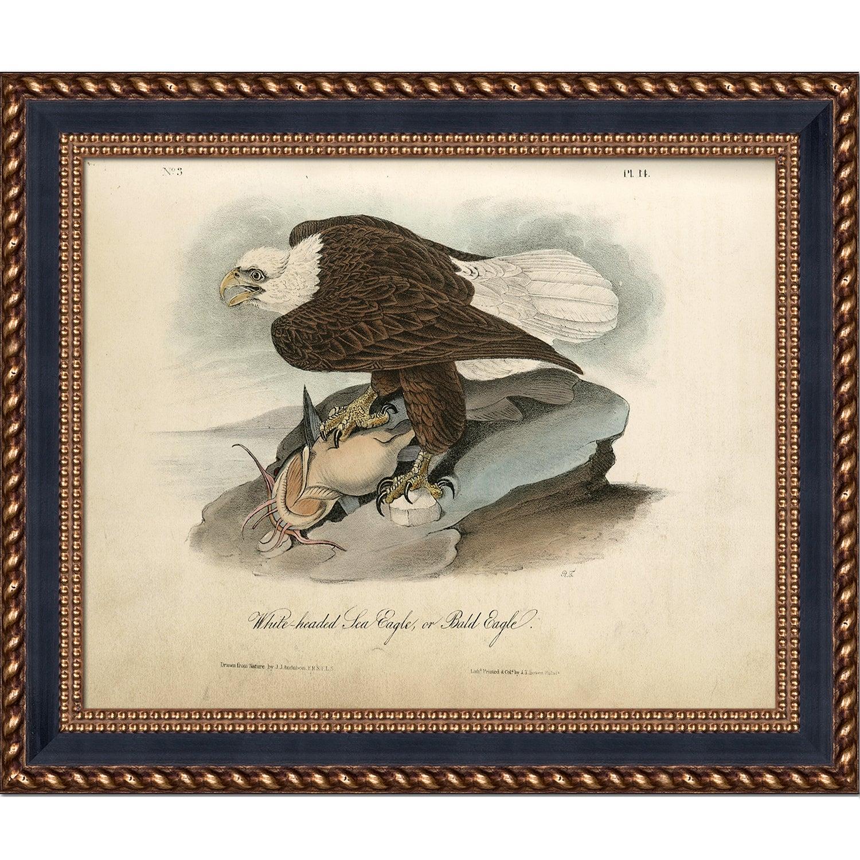 ArtistBe Vintage Collection 'White-headed Sea Eagle' Fram...