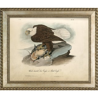 Vintage Collection 'White-headed Sea Eagle' Framed High Quality Print on Canvas