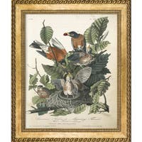 Vintage Collection 'American Robin' Framed High Quality Print on Canvas