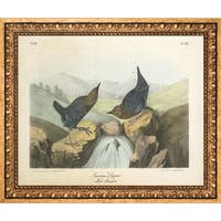 Vintage Collection 'American Dipper' Framed High Quality Print on Canvas