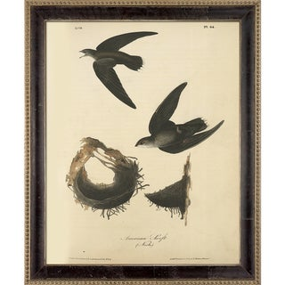Vintage Collection 'American Swift' Framed High Quality Print on Canvas