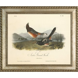 Vintage Collection 'Arctic Ground Finch' Framed High Quality Print on Canvas