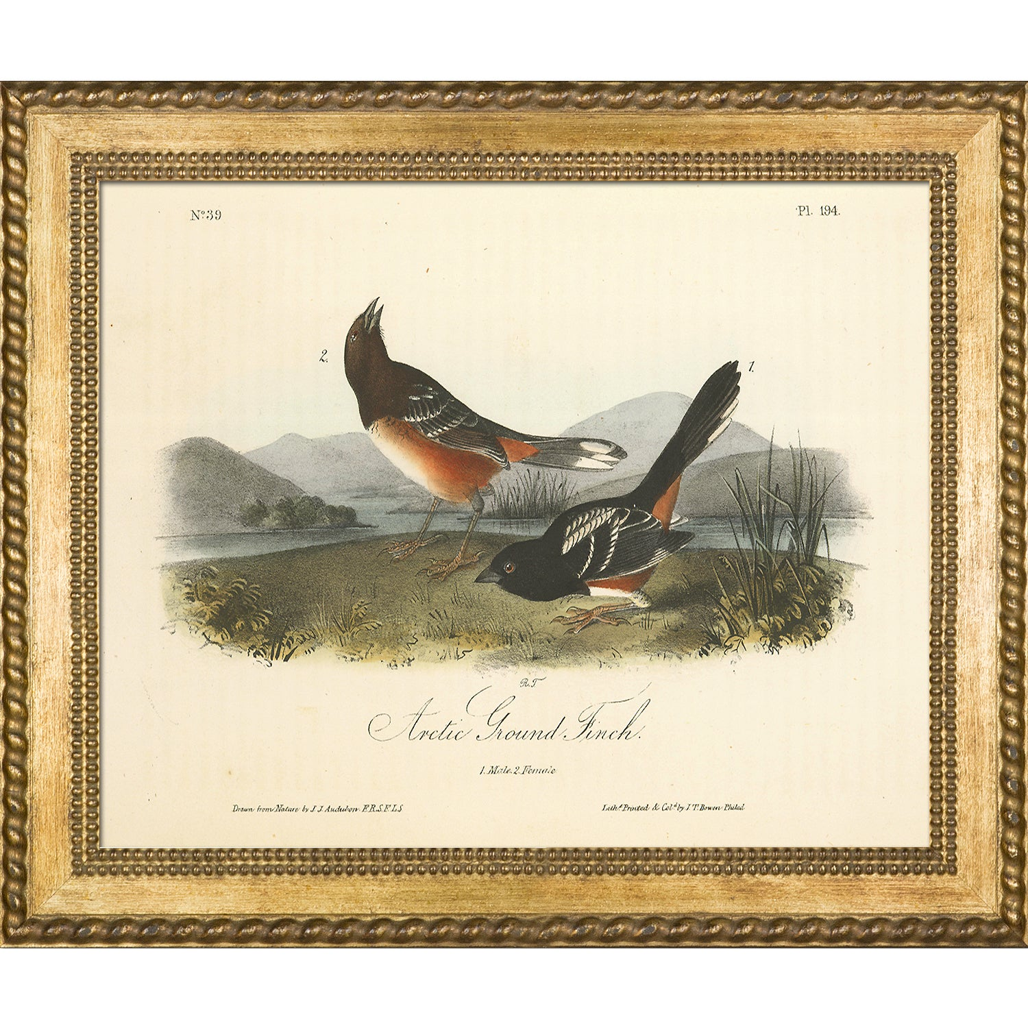 ArtistBe Vintage Collection 'Arctic Ground Finch' Framed ...