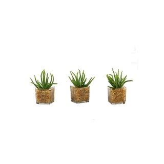 D&W Silks Set of 3 Worm Succulent in Glass Cube