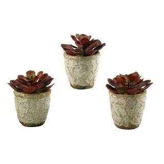 D&W Silks Set of 3 Red/Brown Echeveria in Stoneware