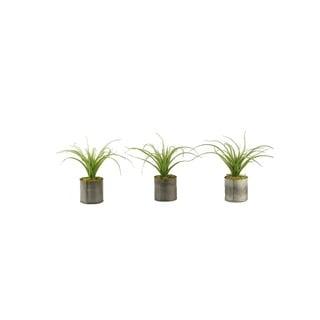 D&W Silks Set of 3 Light Green Curly Tillandsia in Round Tin Planter