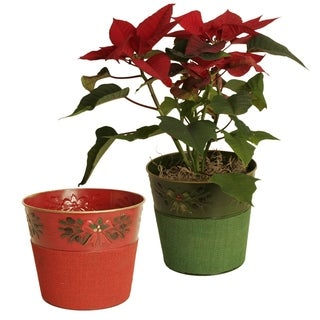 Embossed Holiday Boughs Holiday Metal Pot Cover with Red and Green Burlap, 7""