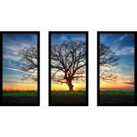 """""""Lonely tree in a field 1"""" Framed Plexiglass Wall Art Set of 3"""