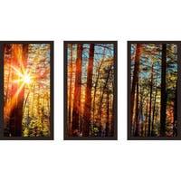 """""""Sun through the trees"""" Framed Plexiglass Wall Art Set of 3"""
