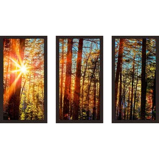 """Sun through the trees"" Framed Plexiglass Wall Art Set of 3"