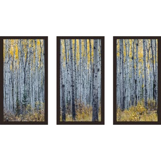 """""""Birch"""" Framed Plexiglass Wall Art Set of 3"""