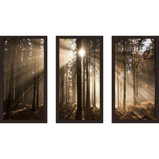 """Autumn morning in forest"" Framed Plexiglass Wall Art Set of 3"