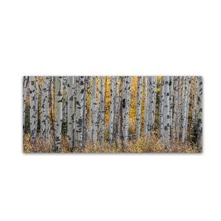 Pierre Leclerc 'Aspen Trees' Canvas Art