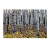 Pierre Leclerc 'Aspen Trees in Autumn' Canvas Art - Multi
