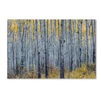 Pierre Leclerc 'Forest of Aspen Trees' Canvas Art