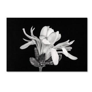 Pierre Leclerc 'Magnolia Flower' Canvas Art