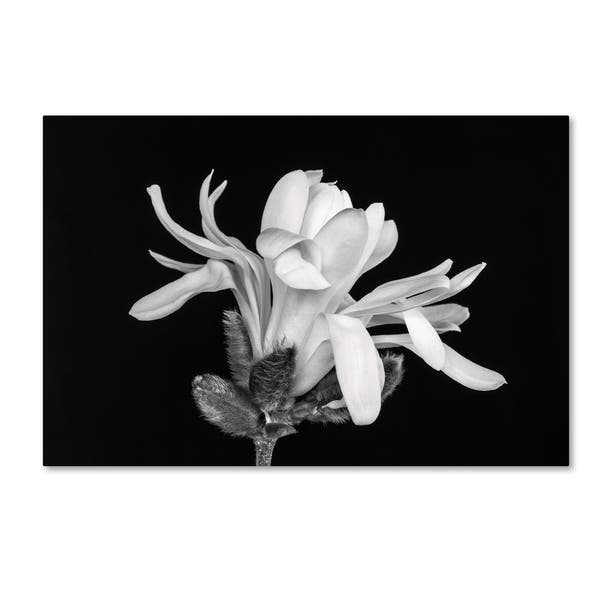 Shop Pierre Leclerc Magnolia Flower Canvas Art Free Shipping