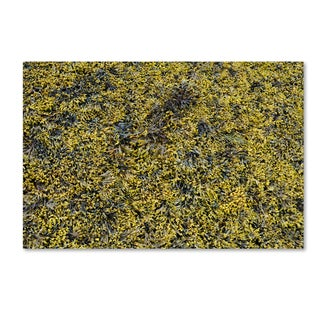 Nicole Dietz 'Seaweed' Canvas Art