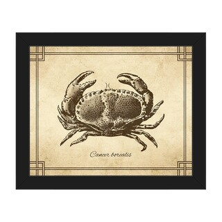 Vintage Crab Zoology' Brown/Black Canvas/Plastic Framed Wall Art