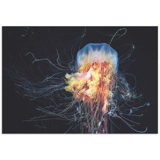 Alexander Semenov 'Lions Mane Jellyfish' Jellyfish Art on Metal or Acrylic