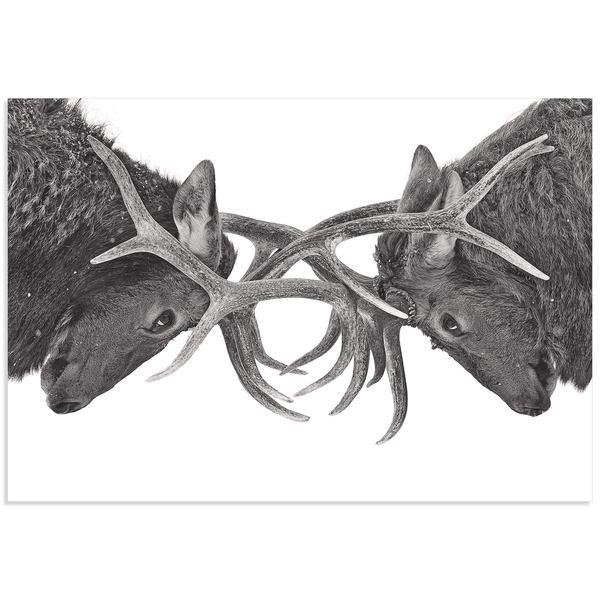 Jim Cumming 'Antler to Antler' Deer Antlers Art on Metal or Acrylic