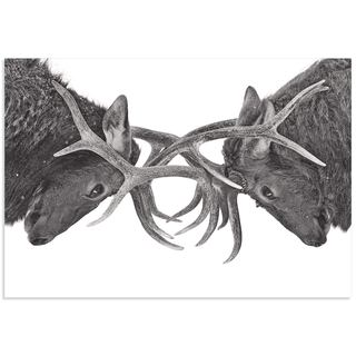 Jim Cumming 'Antler to Antler' Deer Antlers Art on Metal or Acrylic
