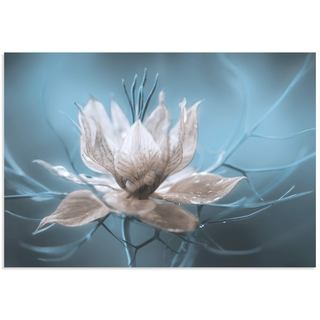 Mandy Disher 'Ice Flower' Frozen Flower Image on Metal or Acrylic