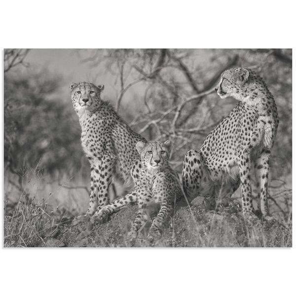 Shop Jaco Marx \'Three Cats\' Cheetah Wall Art on Metal or Acrylic ...