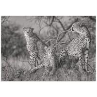 Jaco Marx 'Three Cats' Cheetah Wall Art on Metal or Acrylic