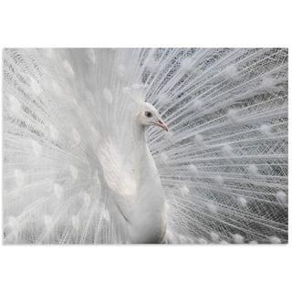 Victoria Ivanova 'Snow White Peacock' White Peacock Art on Metal or Acrylic