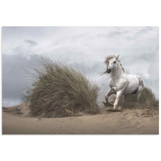 Lucie Bressy 'White Stallion' Wild Horse Art on Metal or Acrylic