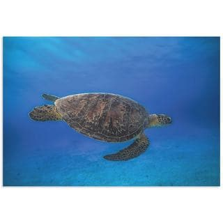 Barathieu Gabriel 'Green Turtle in the Blue' Sea Turtle Art on Metal or Acrylic