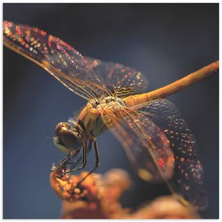 Thierry Dufour 'Golden Dragonfly' Dragonfly Wall Art on Metal or Acrylic