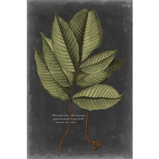 Marmont Hill - 'Foliage Dramatique III' Painting Print on Wrapped Canvas