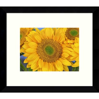 Framed Art Print 'Common Sunflower group showing symmetrical seed heads, North America (III)' by Tim Fitzharris 11 x 9-inch