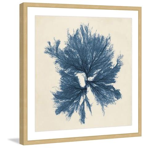 Marmont Hill - Handmade Coastal Seaweed V Framed Print