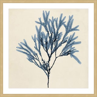 Marmont Hill - 'Coastal Seaweed VIII' Framed Painting Print - Multi