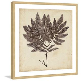 Marmont Hill - 'Vintage Seaweed II' Framed Painting Print