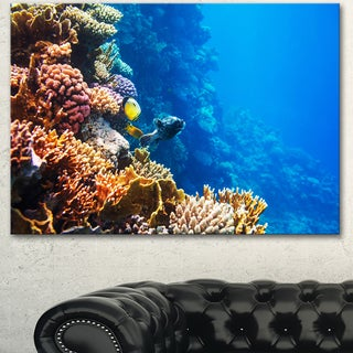 Beautiful Coral Fish of Red Sea - Seashore Canvas Art Print