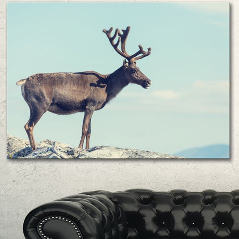 Large Reindeer in Norway - Animal Wall Art Print