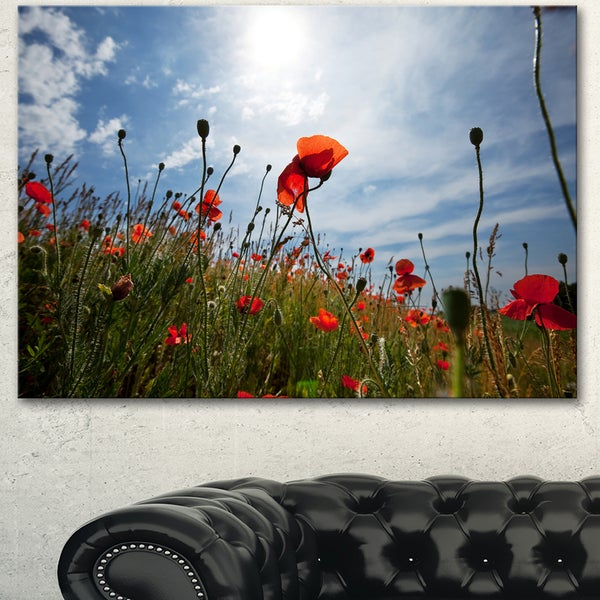Poppy Flower Field View From Ground - Floral Artwork on Canvas - Red