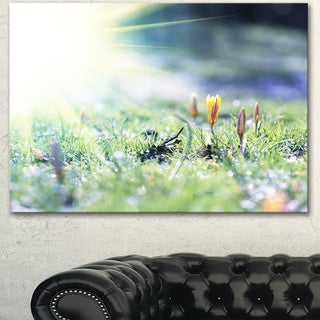Beautiful First Spring Flowers At Dawn - Floral Artwork on Canvas
