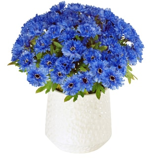 Jane Seymour Bontanicals White Ceramic Cache Pot with 15-inch Tall Blue Cornflowers