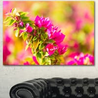Beautiful Pink Bougainvillea Flowers - Floral Artwork on Canvas