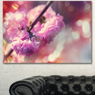 Beautiful Almond Tree Flowers - Floral Artwork on Canvas